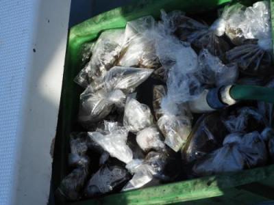 釣具の海友の2019年11月15日(金)3枚目の写真