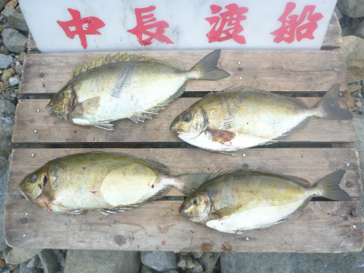 中長渡船の2019年11月22日(金)2枚目の写真