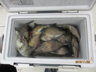 釣具の海友の2019年11月22日(金)2枚目の写真