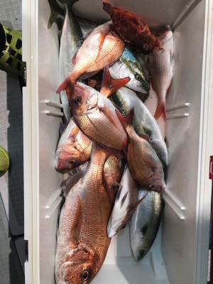 アラタニ釣具店の2019年11月23日(土)4枚目の写真