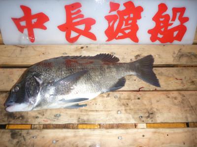 中長渡船の2019年11月24日(日)3枚目の写真