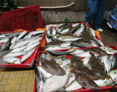 奥村釣船の2019年11月22日(金)3枚目の写真