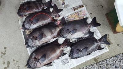 乙島丸の2019年11月25日(月)2枚目の写真