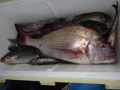 丸銀釣りセンターの2019年11月27日(水)1枚目の写真