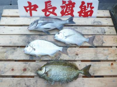 中長渡船の2019年11月29日(金)1枚目の写真