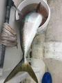 龍宮丸の2019年11月27日(水)3枚目の写真