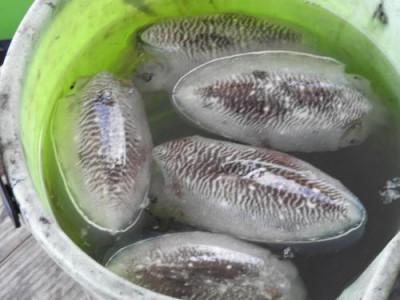 釣具の海友の2019年11月30日(土)3枚目の写真