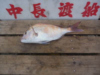 中長渡船の2019年12月11日(水)2枚目の写真