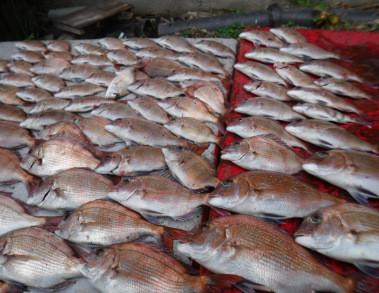 奥村釣船の2019年12月18日(水)2枚目の写真