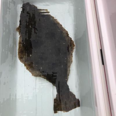 第八幸松丸の2019年12月22日(日)4枚目の写真