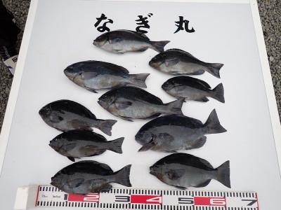 なぎ丸渡船の2019年12月29日(日)5枚目の写真