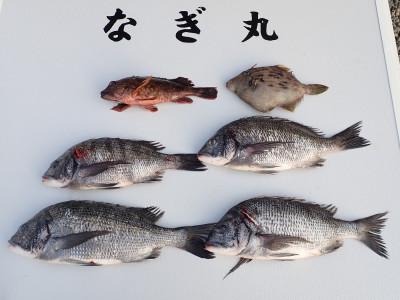 なぎ丸渡船の2020年1月3日(金)2枚目の写真