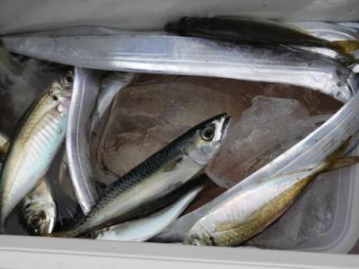 釣具の海友の2020年1月6日(月)1枚目の写真