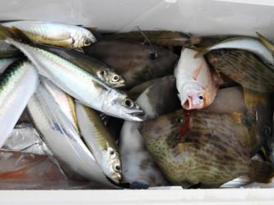 釣具の海友の2020年1月6日(月)2枚目の写真