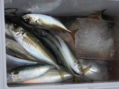 釣具の海友の2020年1月6日(月)3枚目の写真