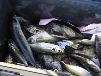 釣具の海友の2020年1月11日(土)5枚目の写真