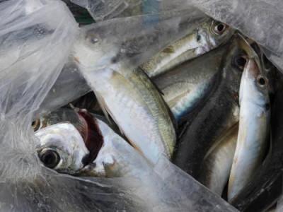 釣具の海友の2020年1月16日(木)3枚目の写真