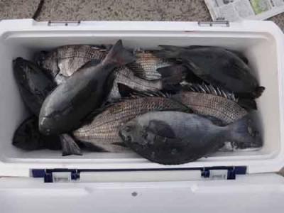 丸銀釣りセンターの2020年1月17日(金)2枚目の写真