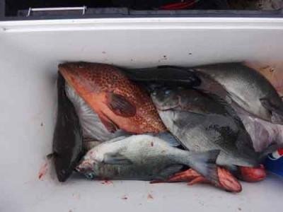 丸銀釣りセンターの2020年1月22日(水)4枚目の写真