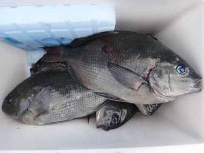 丸銀釣りセンターの2020年1月22日(水)5枚目の写真