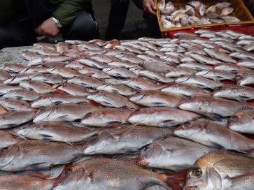 奥村釣船の2020年1月23日(木)4枚目の写真