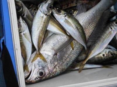 釣具の海友の2020年1月24日(金)3枚目の写真