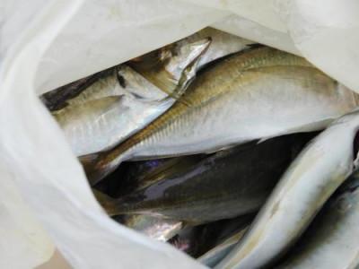 釣具の海友の2020年1月25日(土)3枚目の写真