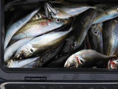 釣具の海友の2020年1月25日(土)4枚目の写真