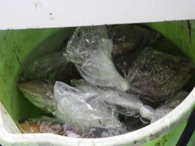 釣具の海友の2020年1月25日(土)5枚目の写真