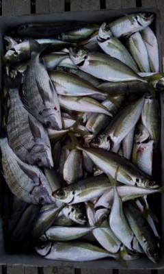 旅館 海の都 勢力丸の2020年1月29日(水)3枚目の写真