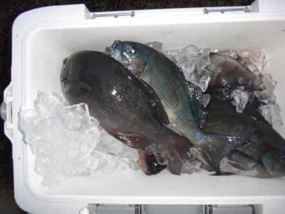 丸銀釣りセンターの2020年1月29日(水)3枚目の写真