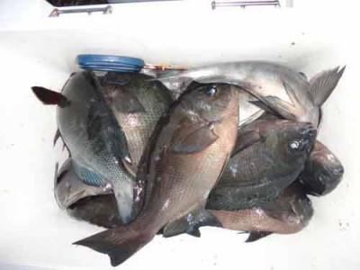 丸銀釣りセンターの2020年1月29日(水)4枚目の写真