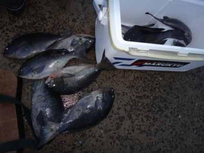 丸銀釣りセンターの2020年1月29日(水)5枚目の写真