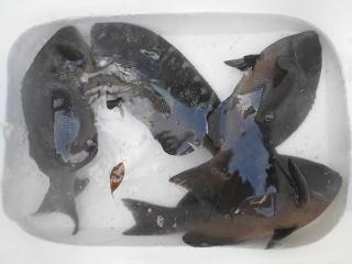 弁天丸の2020年1月30日(木)3枚目の写真