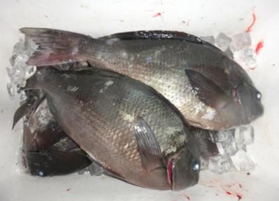 丸銀釣りセンターの2020年2月16日(日)1枚目の写真