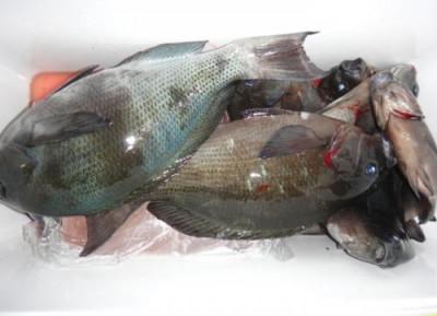 丸銀釣りセンターの2020年2月16日(日)2枚目の写真