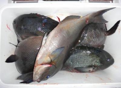 丸銀釣りセンターの2020年2月16日(日)3枚目の写真