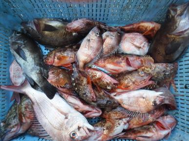 奥村釣船の2020年2月27日(木)4枚目の写真