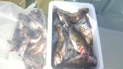 釣船 啓幸丸の2020年2月29日(土)4枚目の写真