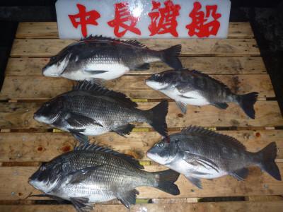 中長渡船の2020年3月13日(金)1枚目の写真