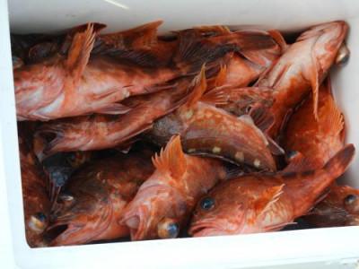 釣具の海友の2020年3月17日(火)3枚目の写真