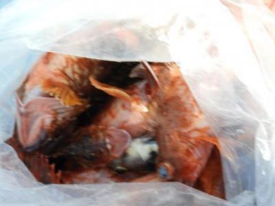 釣具の海友の2020年3月17日(火)4枚目の写真