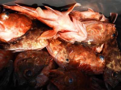 釣具の海友の2020年3月18日(水)3枚目の写真