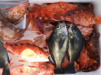 釣具の海友の2020年3月18日(水)4枚目の写真