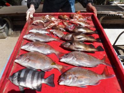 奥村釣船の2020年3月20日(金)4枚目の写真
