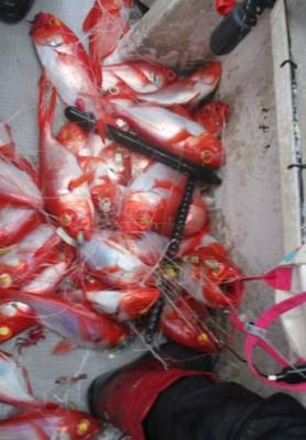 安芸のハマちゃん 浜田釣舟の2020年3月22日(日)4枚目の写真
