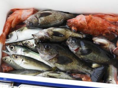 釣具の海友の2020年3月22日(日)4枚目の写真