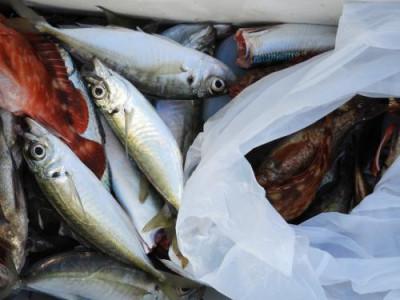 釣具の海友の2020年3月24日(火)4枚目の写真