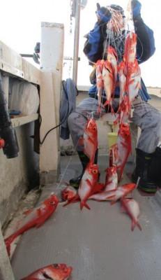 安芸のハマちゃん 浜田釣舟の2020年3月25日(水)1枚目の写真