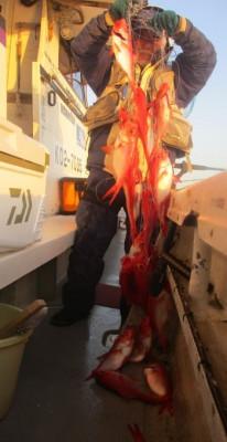 安芸のハマちゃん 浜田釣舟の2020年3月25日(水)3枚目の写真